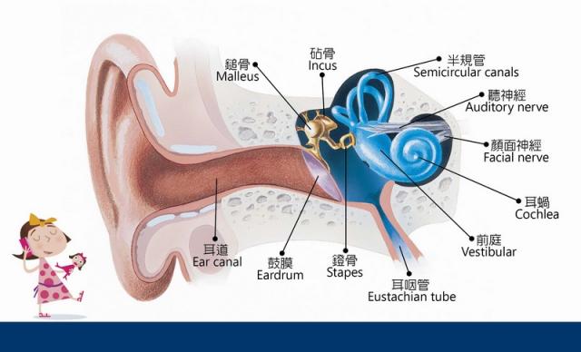 聽損的類型